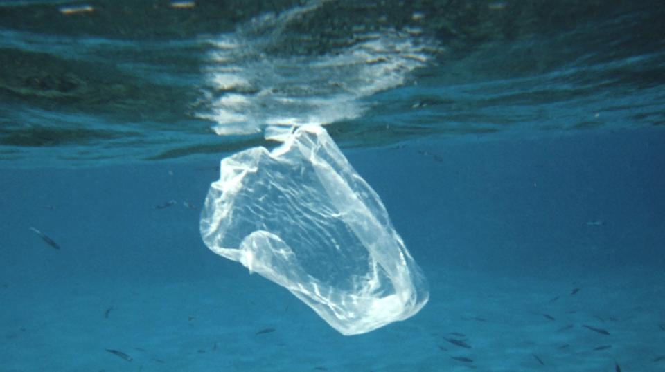 ZALERION MARITIMUM: el hongo que elimina el plástico del mar