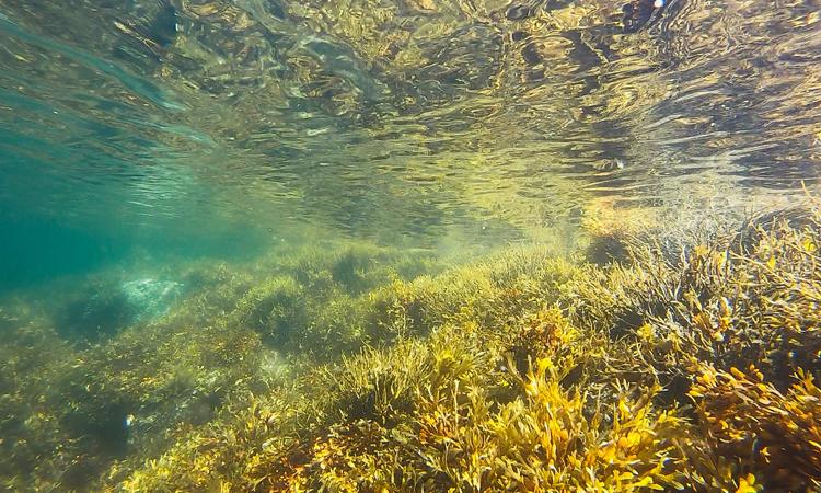 Se han empezado a limpiar los fondos marinos de Vigo