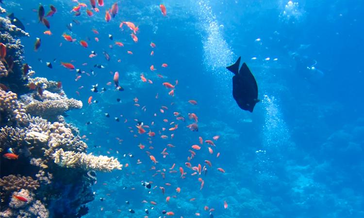 El Puerto de Vigo es galardonado por sus jardines submarinos