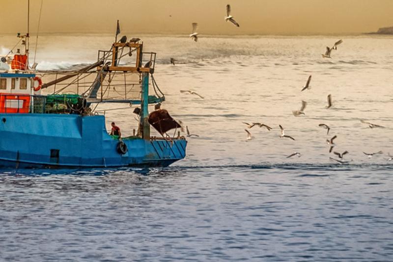 El sector pesquero requiere marineros y mandos