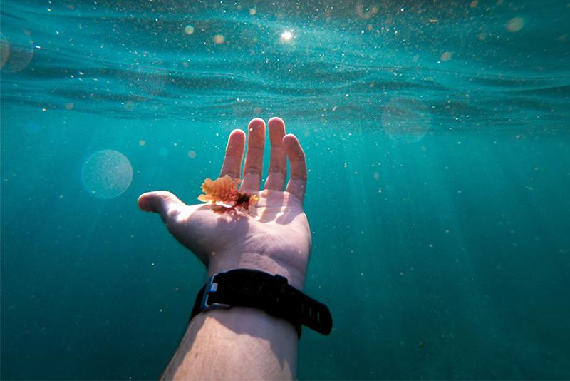 Nuevo proyecto de investigación : convertir algas en un carburante renovable